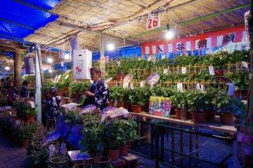 <p>Morning glory market at night</p>