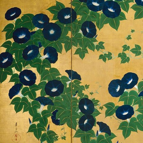A Passion for Morning Glories