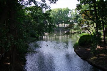 The Serenity of Togoshi Park