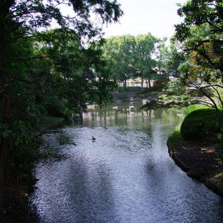 The Serenity of Togoshi Park