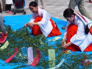 Children's messages being tied to branches, to be displayed at the shrine. This is a special event happening around the Tanabata Festival (July 7th every year)