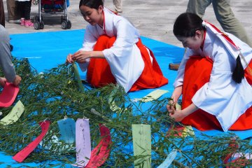 <p>Children&rsquo;s messages being tied to branches, to be displayed at the shrine. This is a special event happening around the Tanabata Festival (July 7th every year)</p>