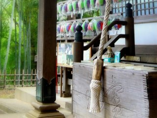 Colored paper lanterns protected by plastic, with green bamboo in the background