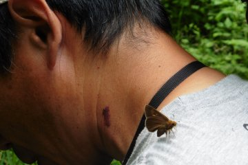 <p>This visitor&#39;s sweat apparently tasted good to this butterfly</p>