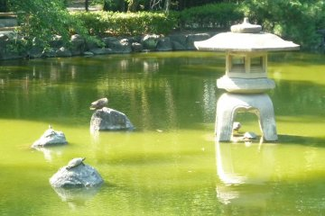 Pond and residents of Nakamura Park.