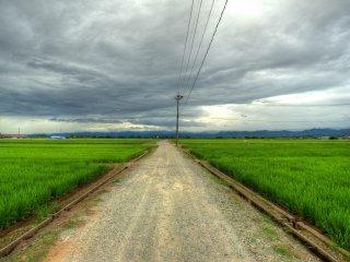 Bạn có thể đi vào các cánh đồng lúa hai bên đường