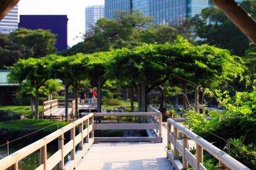 Khu vườn Hama-rikyu