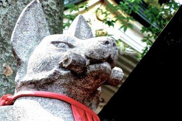 Đền thờ cáo ở Akasaka vào tháng 6- 2
