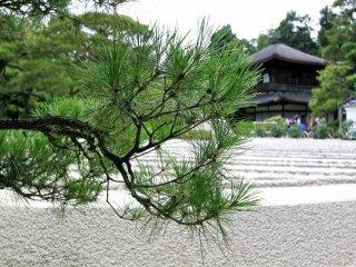 วัดกินคาคุจิ(Gingakuji Temple)