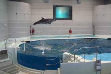 Take in a dolphin show for some cool acrobatics