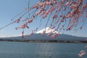 Mt.Fuji at Lake Kawaguchiko