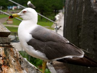 If you have ever wanted to get up close and personal with a seagull, this is the place to do it