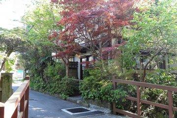 <p>บ้านหลังหนึ่งมีต้นเมเปิลญี่ปุ่นมีใบสีม่วงเข้ม</p>