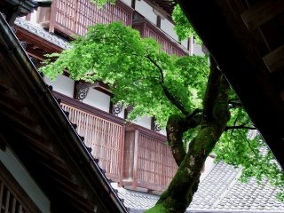 Looking at one of the temple buildings through roof tiles and green leaves