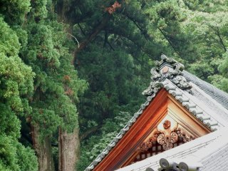 Temple roof and cedar trees in the backdrop