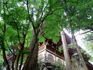 Looking up at one of the temple buildings through tall trees