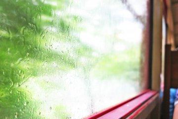 <p>窗外的风景,郁郁葱葱 (因为下午开不了窗,略残念)</p>