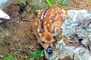 A bambi which we saw near the start of the trailhead. I do hope it returned safely to its mother!