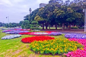 Just a small selection of Yamashita Park's many beautifully colored flower bed displays