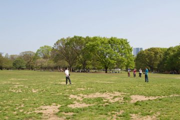 Large open space ideal for playing