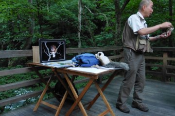 <p>Short lecture about the Japanese flying squirrel</p>