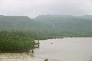Mangroves along the river - looks a bit like Jurassic Park?