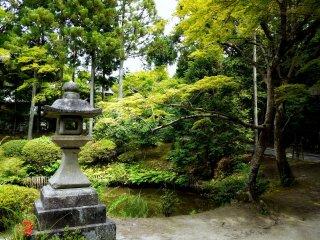 Những cây phong xung quanh chắc chắn sẽ tạo ra màu sắc tuyệt vời vào mùa thu