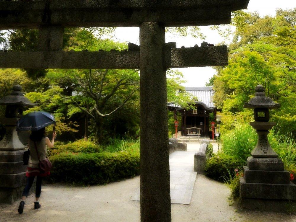 Bentendo nằm giữa lùm cây xanh mát của đầu hạ