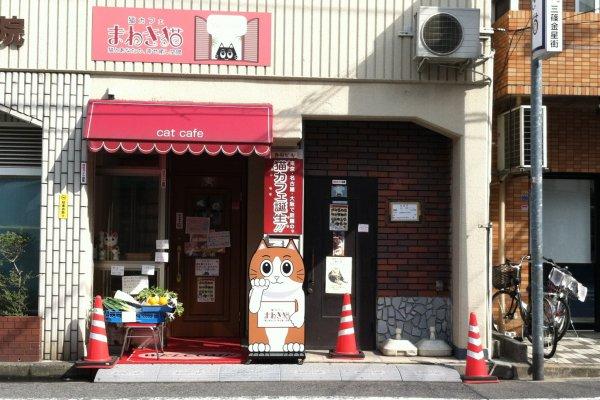 Cat Cafe Near Osaka Station
