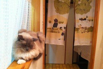 <p>Fuzzy Mash-kun drifts off to sleep</p>