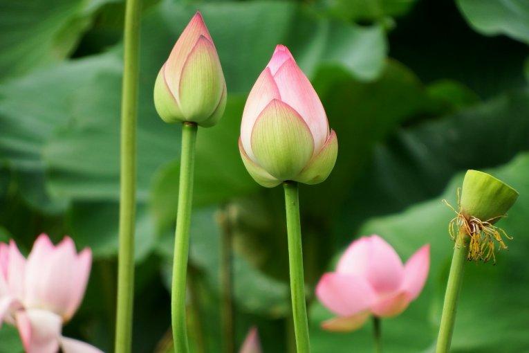 写真天国: 福井「花はす公園」