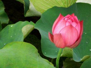 Bunga yang kaya akan warna!
