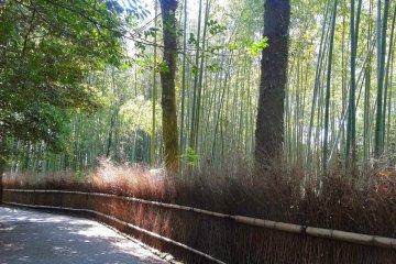 อ่านไฮกุ กินดังโกะ ชมป่าไผ่