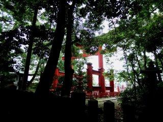 어두운 나무 사이로 보이는 케히진구의 아름다운 붉은 문