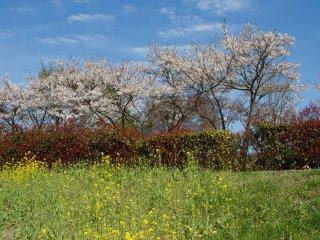 만개한 꽃들 말고도 다른 자연의 색을 봤을 때, 날씨에 운이 좋았다고 생각했다.