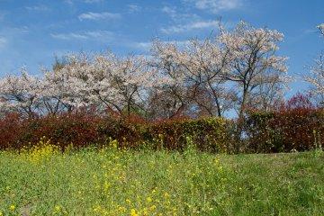 <p>만개한 꽃들 말고도 다른 자연의 색을 봤을 때, 날씨에 운이 좋았다고 생각했다.</p>