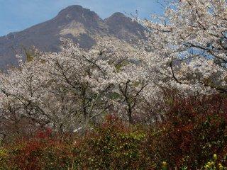 The peak of Yufu-dake, watching you wherever you go...