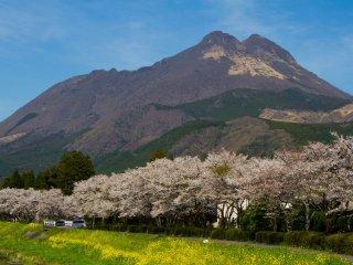 두 개의 봉우리를 가진 산, 유후다케가 유후 시(일본어로는 '유후인')의 작은 마을을 내려다보고 있다.