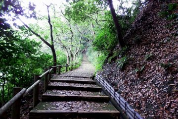 <p>Yet no flowers are to be seen, just the long stairs toward the top of the hill</p>