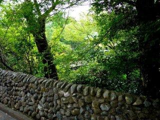 Pemandangan pepohonan ketika menuju jembatan
