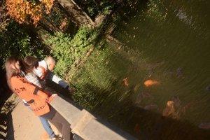 水下鲤鱼家园