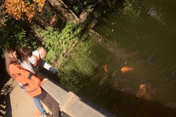 <p>水下鲤鱼家园</p>