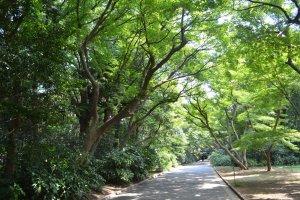 ทางเดินสองข้างทางเต็มไปด้วยต้นไม้นานาชนิด