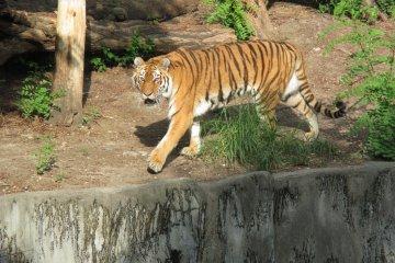 텐노지 동물원