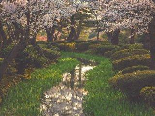 พื้นที่ภายในสวน Kenroku นั้นได้รับการออกแบบและตกแต่งอย่างประณีตทุกตารางนิ้ว พื้นที่หลักในการชมซากุระนั้นมีสายน้ำเล็กๆไหลผ่าน ประดับด้วยไม้พุ่มเตี้ยๆ และให้ต้นซากุระแผ่กิ่งก้านปกคลุมพื้นที่ส่วนใหญ่ ความงามที่เกิดขึ้นจึงไม่ได้มาจากซากุระเพียงอย่างเดียว แต่เป็นความงามที่เกิดขึ้นจากการจัดวางพื้นที่อย่างเรียบง่าย แต่แฝงไว้ด้วยความลงตัว