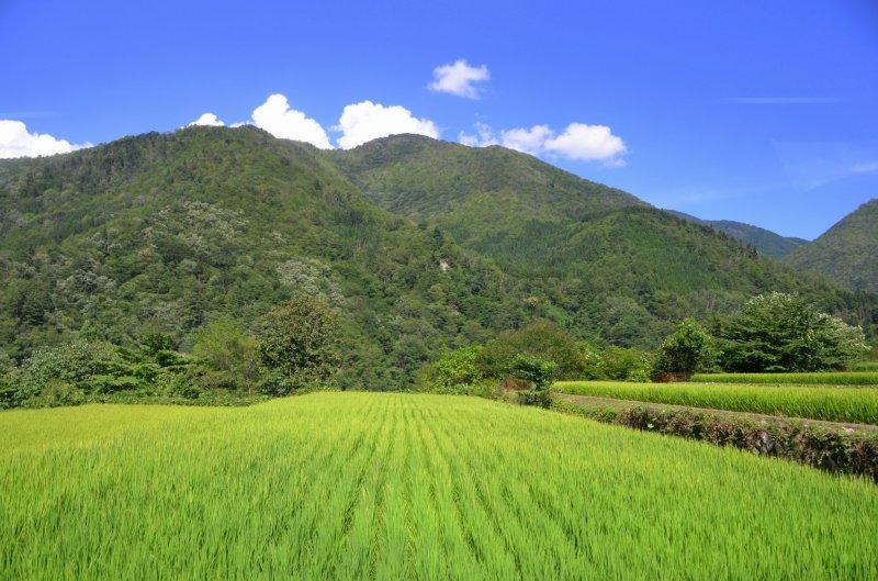 <p>Enroute to&nbsp;Shirakawago, Gifu</p>
