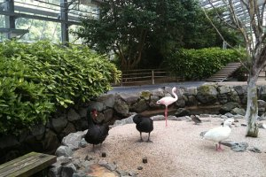 Vogel Park, Matsue City, Shimane Prefecture