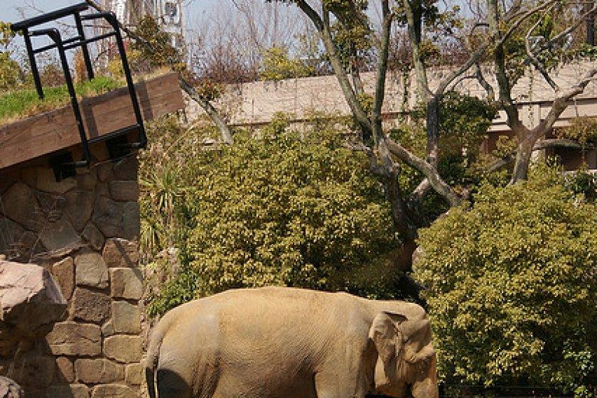 أكبر الثديات البرية