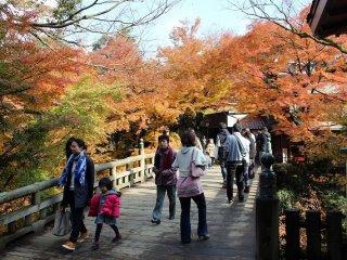 こおろぎ橋は全長21メートル、総檜造りである