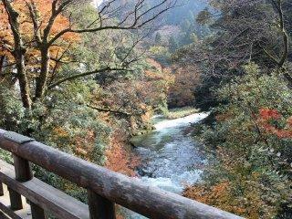 こおろぎ橋から上流を臨む